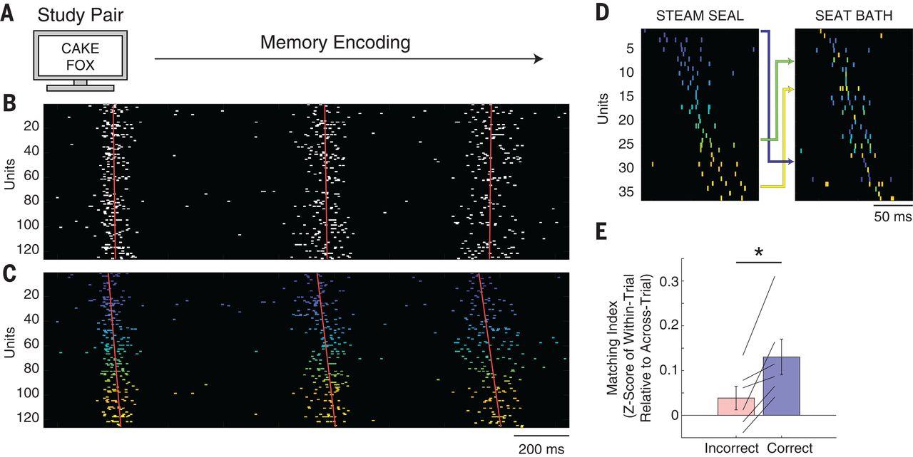 Прояснен механизм памяти: при попытке вспомнить что-то нейроны мозга активируются в последовательности запоминания - 3