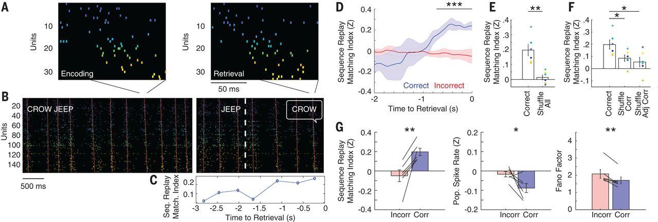 Прояснен механизм памяти: при попытке вспомнить что-то нейроны мозга активируются в последовательности запоминания - 4