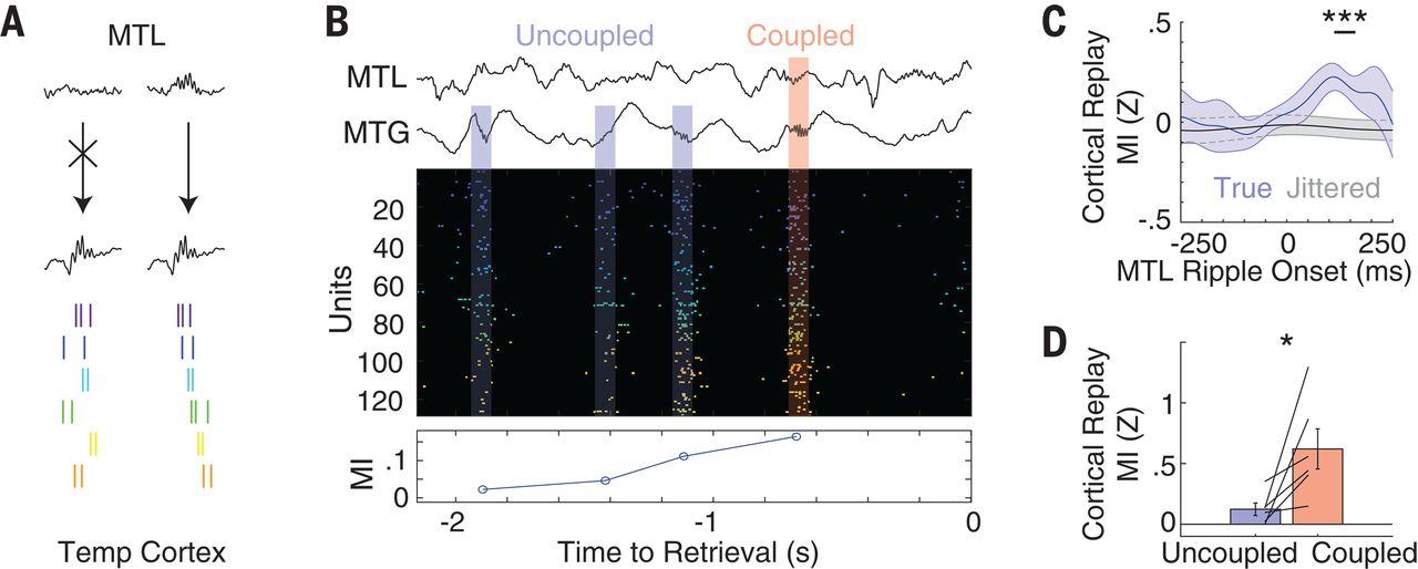 Прояснен механизм памяти: при попытке вспомнить что-то нейроны мозга активируются в последовательности запоминания - 5