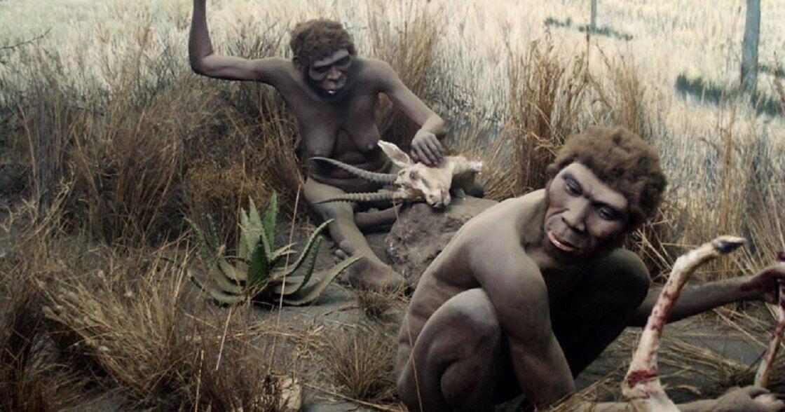 Homo erectus имели способность к развитию