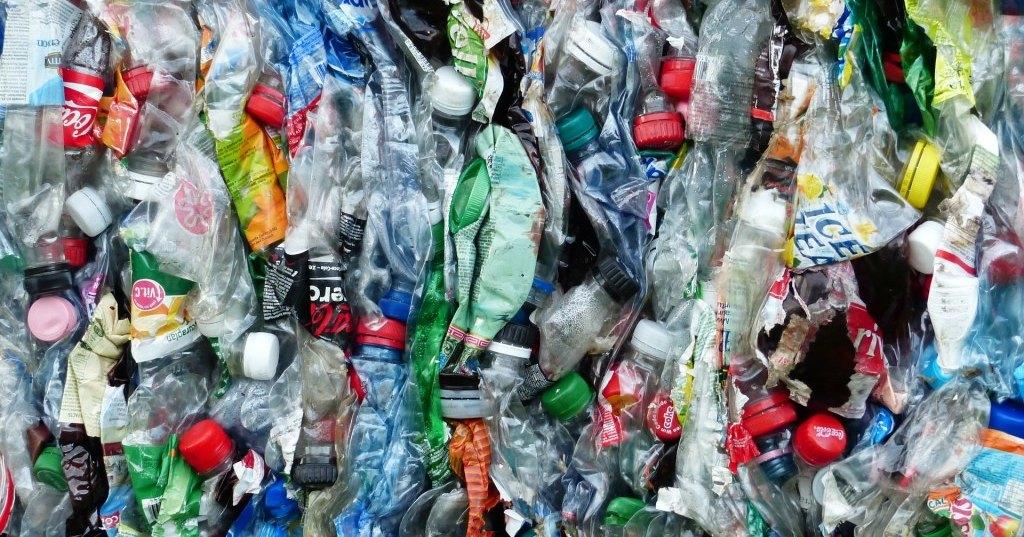 Моль научилась питаться пластиковым мусором