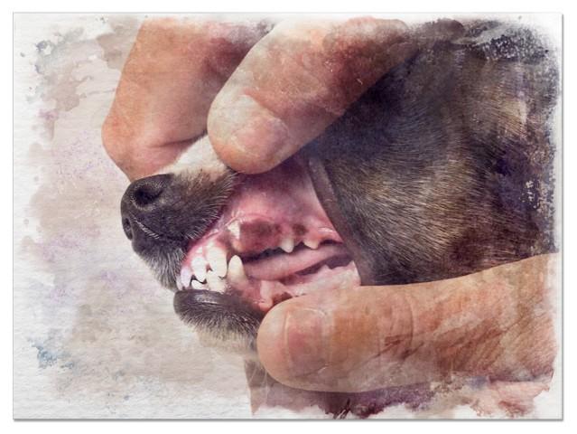 изображение десен собаки с анемией