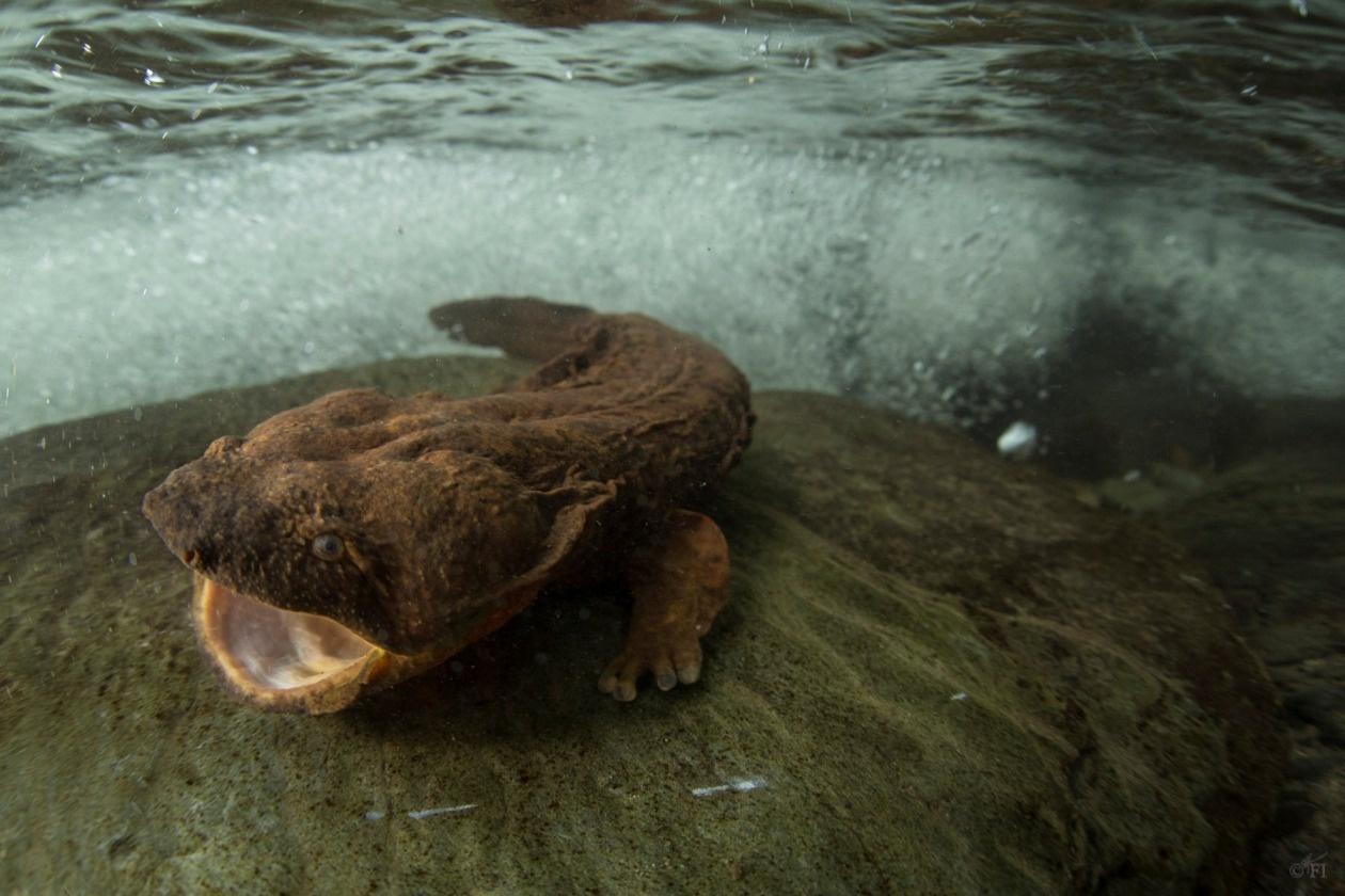 10 самых странных живых ископаемых