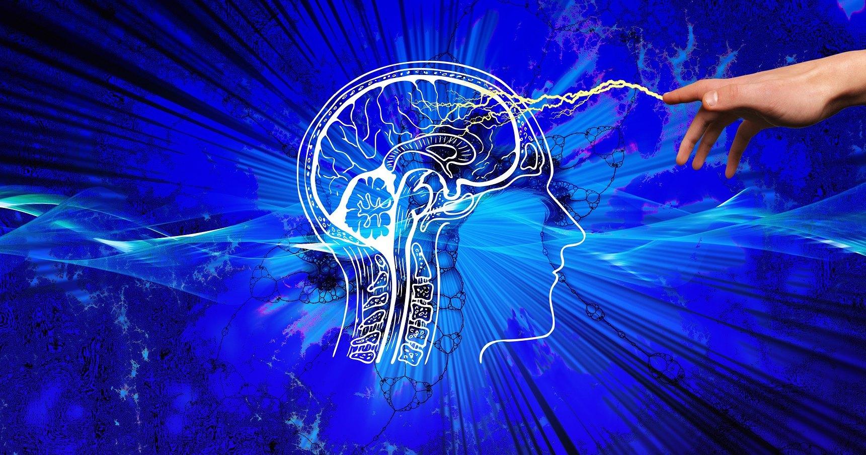 В каких частях мозга зарождается страх