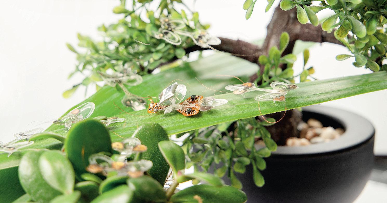 Жук против мухобойки: как выглядят насекомые-роботы