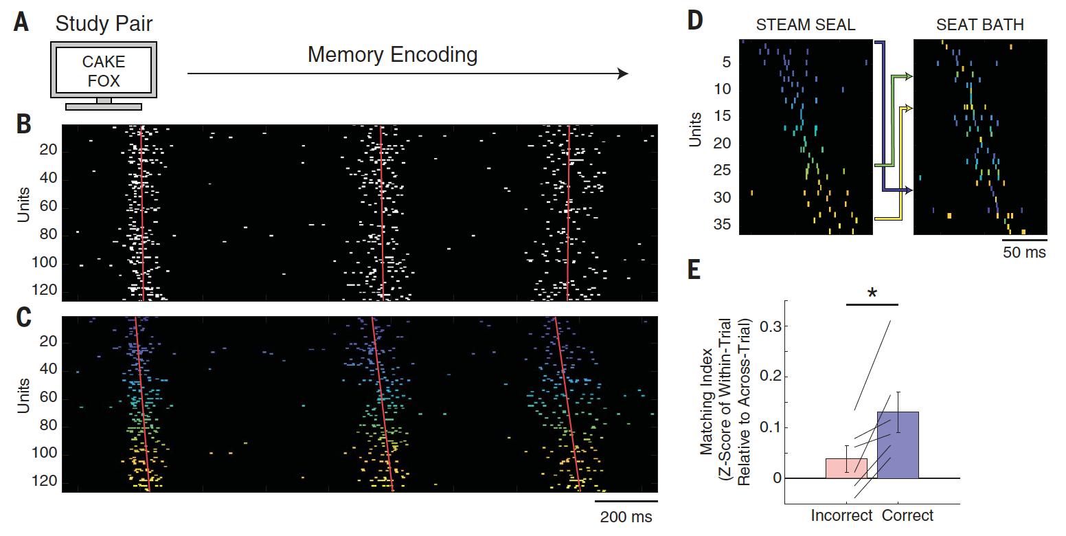 Архивы памяти: как мозг кодирует и воспроизводит воспоминания - 3