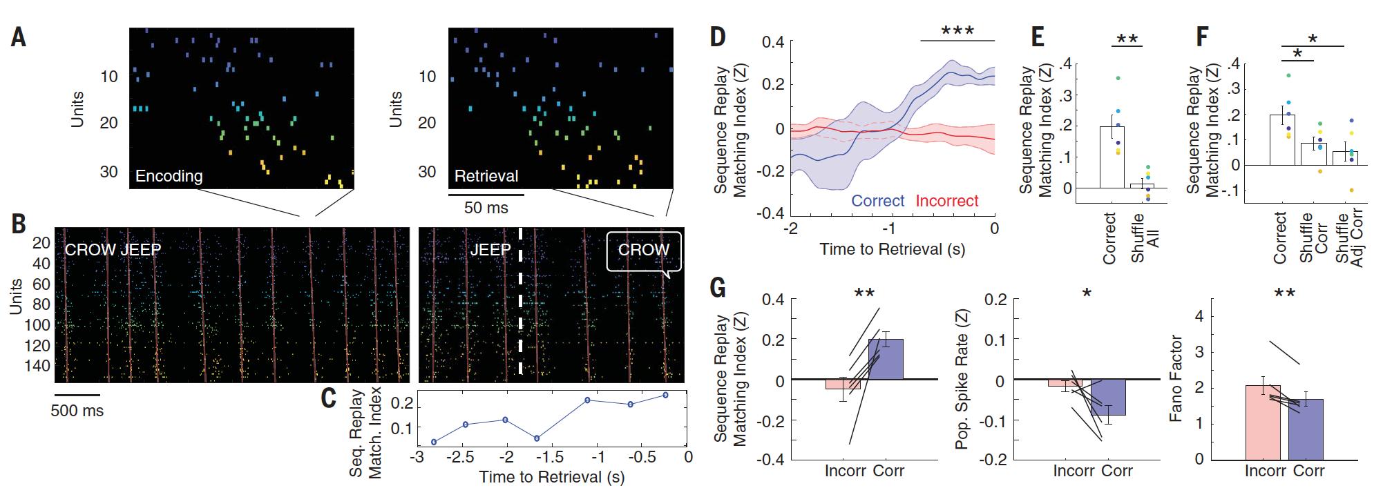 Архивы памяти: как мозг кодирует и воспроизводит воспоминания - 4