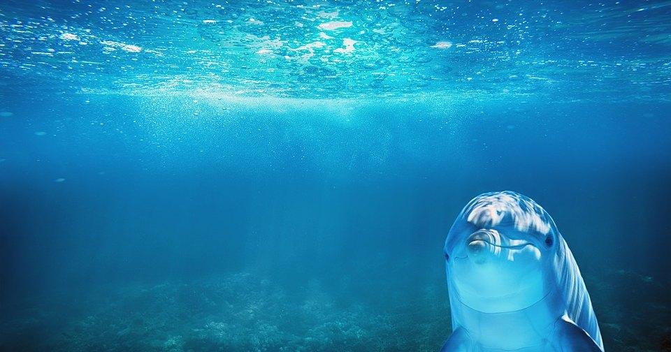 В опустевшую Венецию приплыли дельфины