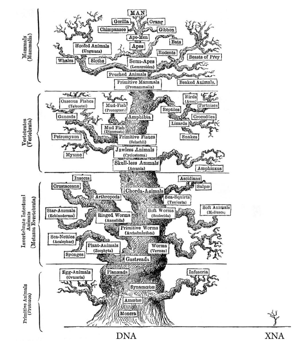 Игра в бога: искусственные организмы - 9