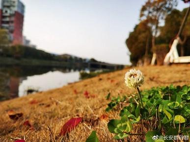 Появились долгожданные фото с камеры Huawei P40 Pro