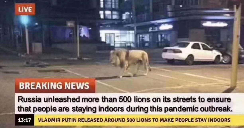 Новый фейк про РФ: 500 львов на улицах для соблюдения карантина