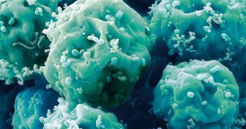 Что скрывают стволовые клетки 114-летней женщины: эликсир жизни