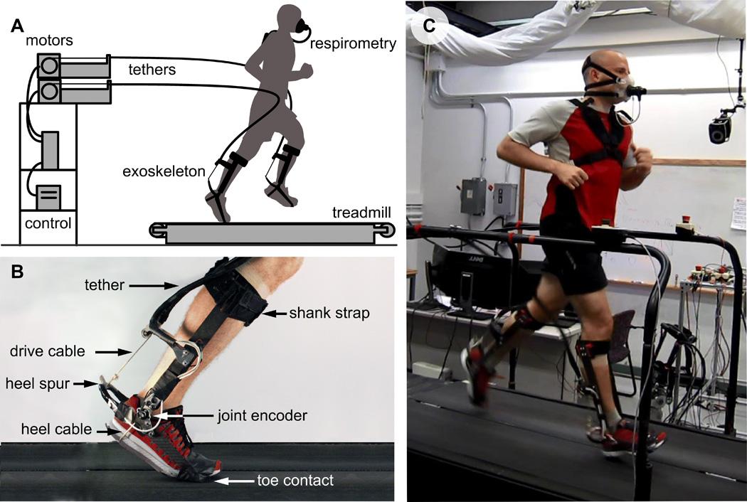 Исследователи из Стэнфорда разработали экзоскелет для бега - 1