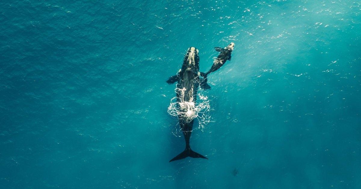Посмотрите на удивительные снимки диких животных