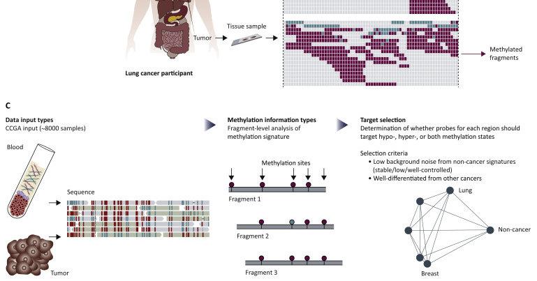 Новый анализ крови позволит выявлять до 50 видов рака