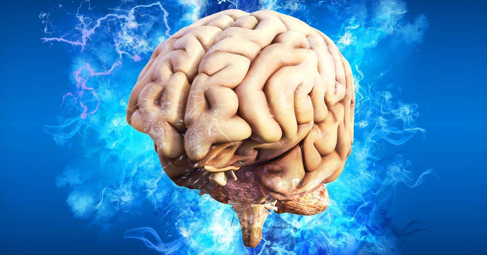 Как устроен человеческий мозг: проверьте свои знания
