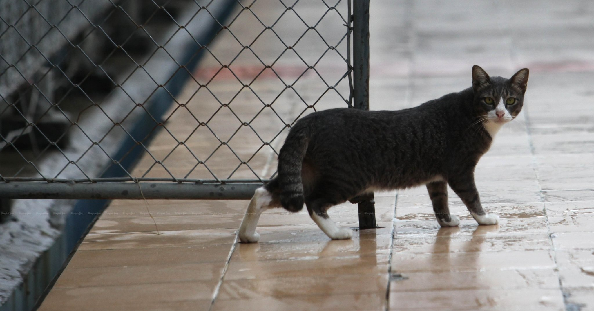 У 15% кошек из Ухани обнаружены следы коронавируса