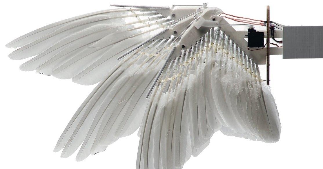Что если самолеты получат крылья птиц: от прототипа к реальности