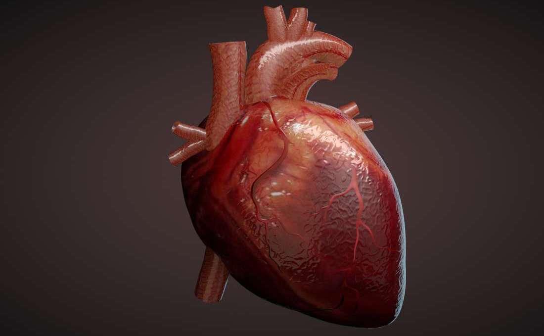 Здоровых людей нет, есть недообследованные: ранняя диагностики ишемической болезни сердца - 1