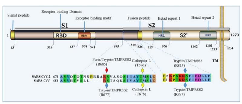 SARS нерукотворный? Генеалогия уханьского коронавируса - 15