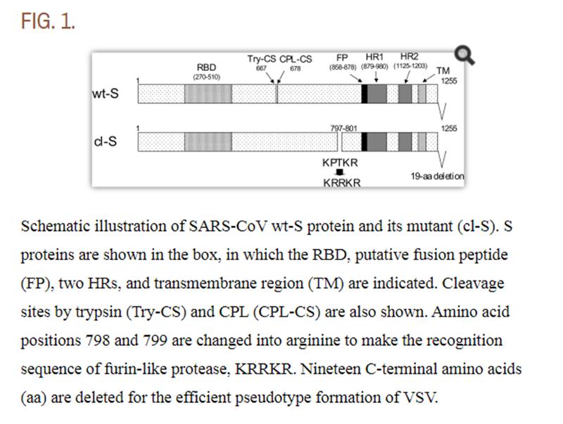 SARS нерукотворный? Генеалогия уханьского коронавируса - 19