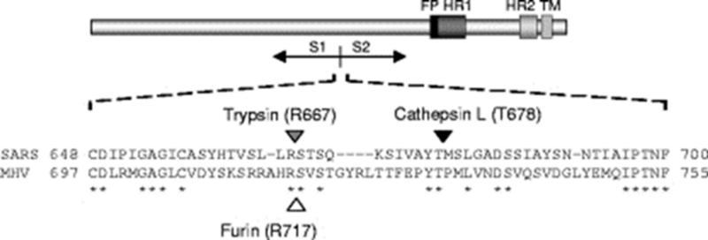 SARS нерукотворный? Генеалогия уханьского коронавируса - 20