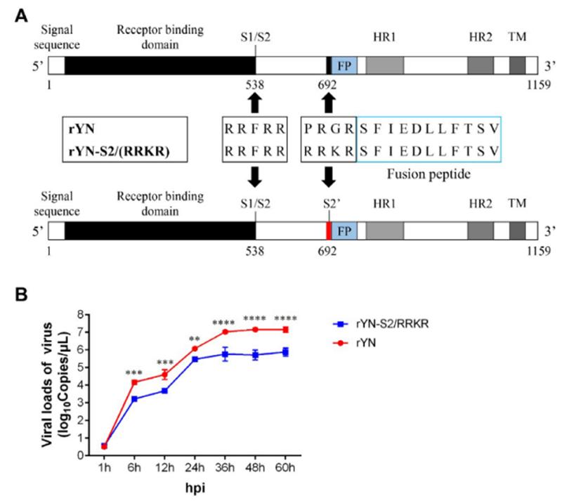 SARS нерукотворный? Генеалогия уханьского коронавируса - 21