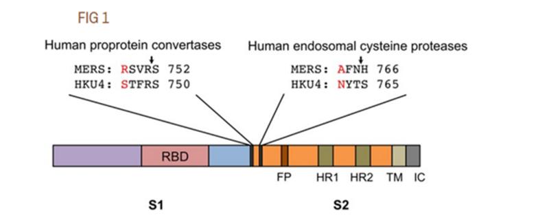 SARS нерукотворный? Генеалогия уханьского коронавируса - 22