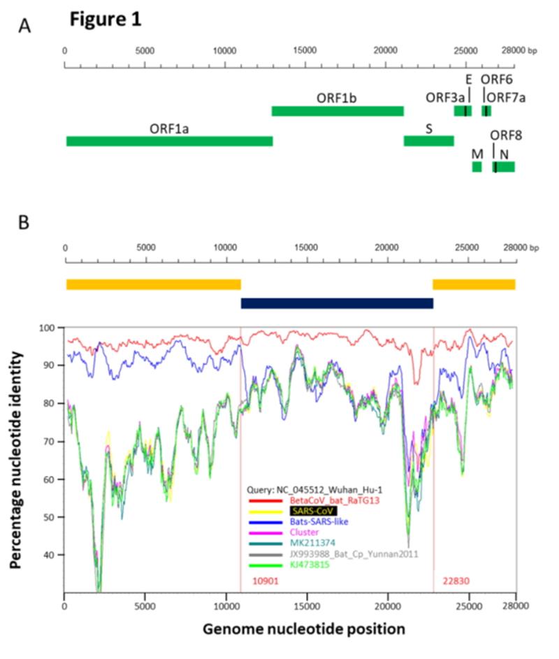 SARS нерукотворный? Генеалогия уханьского коронавируса - 23