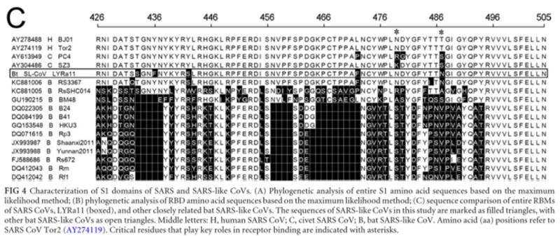 SARS нерукотворный? Генеалогия уханьского коронавируса - 29