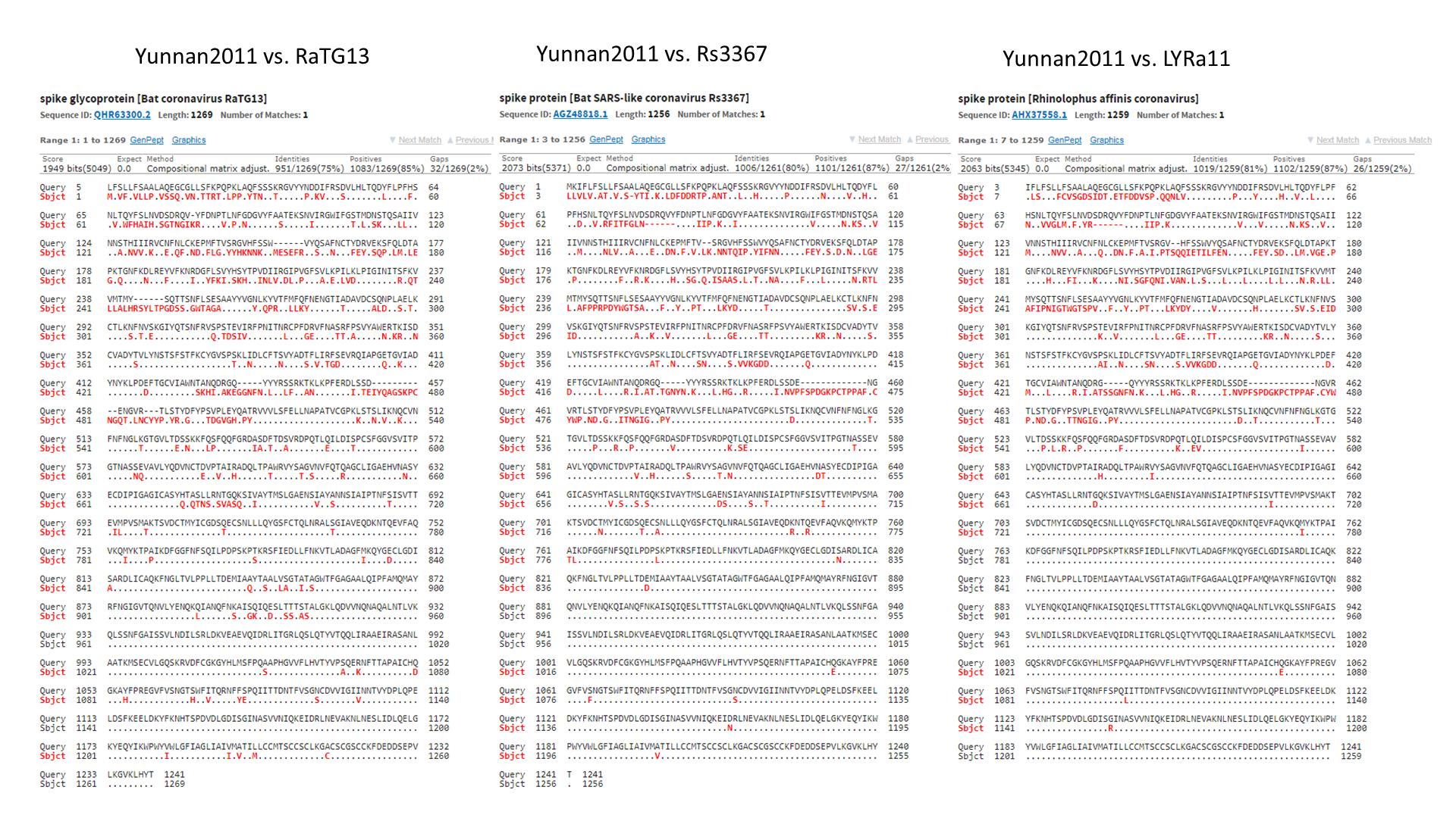 SARS нерукотворный? Генеалогия уханьского коронавируса - 31