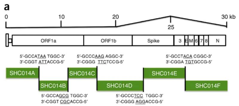 SARS нерукотворный? Генеалогия уханьского коронавируса - 38
