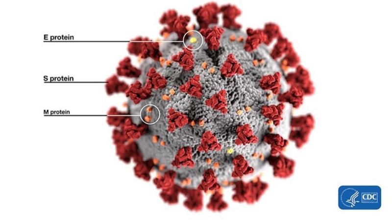 SARS нерукотворный? Генеалогия уханьского коронавируса - 4