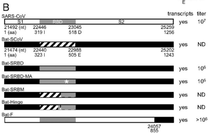 SARS нерукотворный? Генеалогия уханьского коронавируса - 40