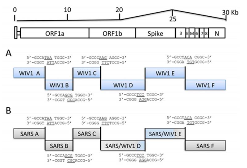 SARS нерукотворный? Генеалогия уханьского коронавируса - 41