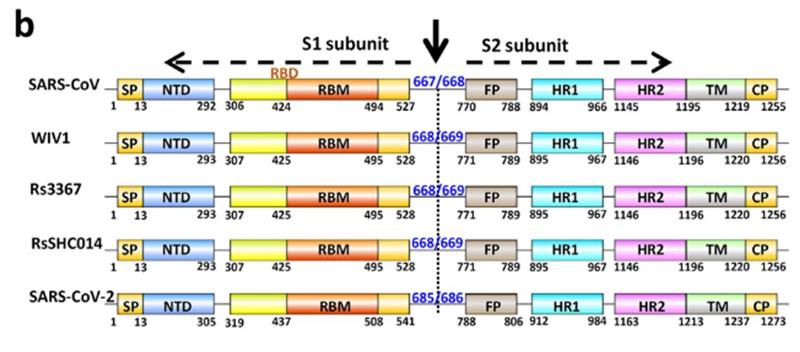SARS нерукотворный? Генеалогия уханьского коронавируса - 5