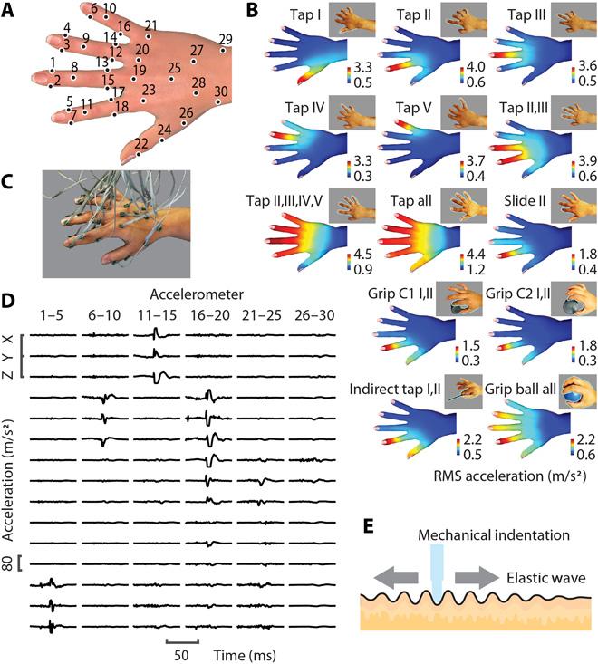 Прикоснуться к миру: биомеханика рецепторов кожи человека - 3