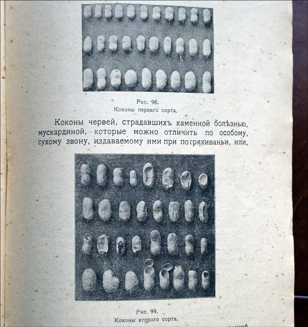 Как воспитать здорового довольного червя: разбираем инструкцию 1910 года - 28