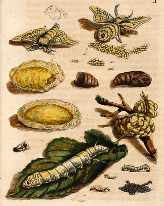Как воспитать здорового довольного червя: разбираем инструкцию 1910 года - 6