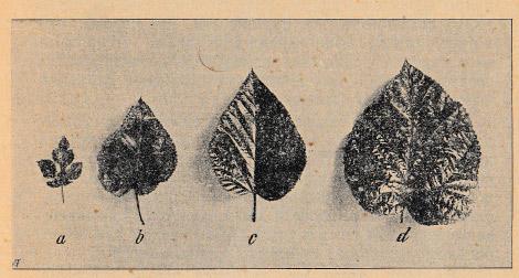 Как воспитать здорового довольного червя: разбираем инструкцию 1910 года - 8