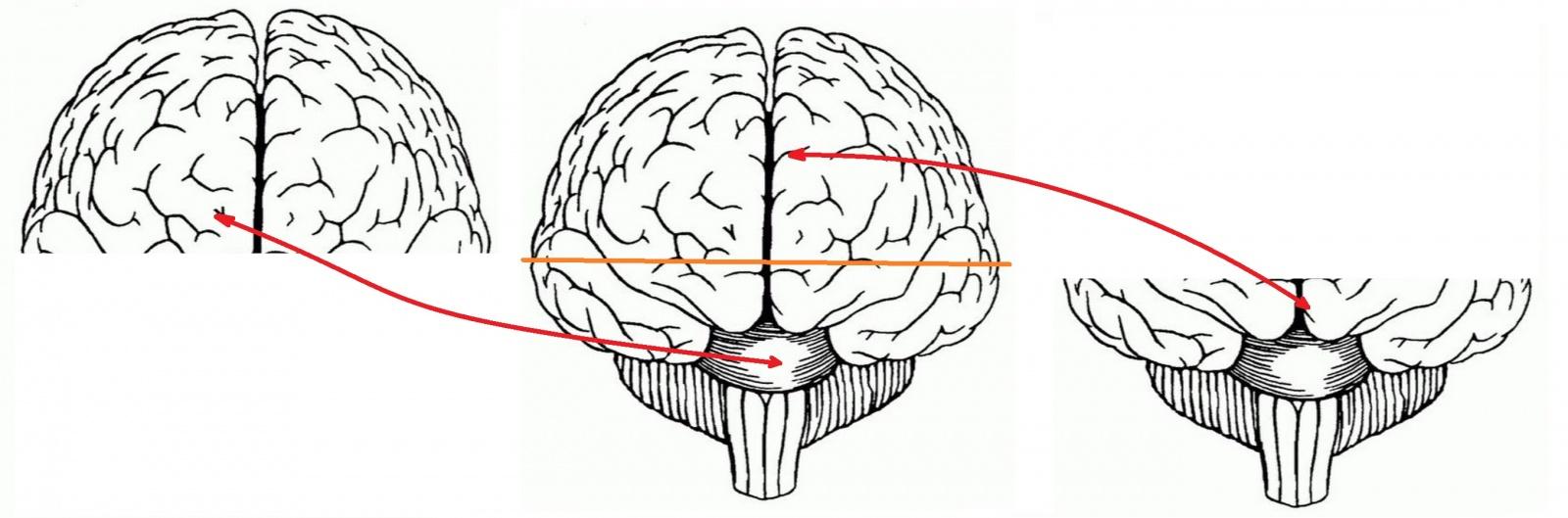 Инструкция по переносу своего сознания на цифровой носитель - 3