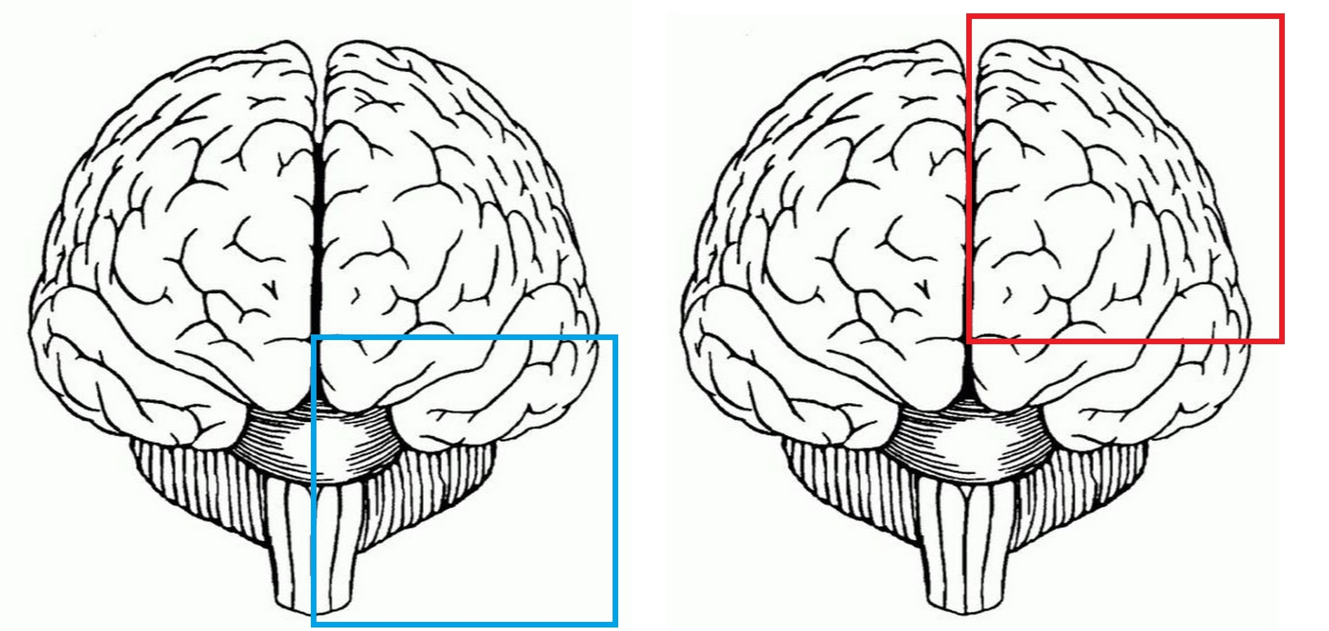Инструкция по переносу своего сознания на цифровой носитель - 4