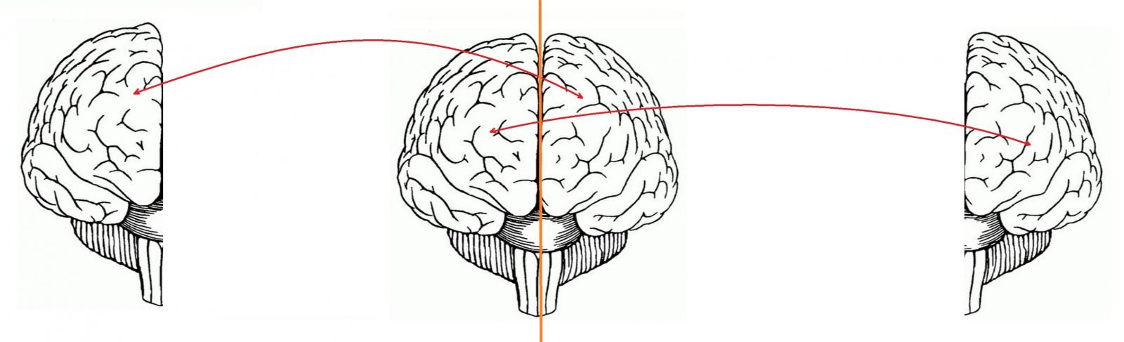 Инструкция по переносу своего сознания на цифровой носитель - 1