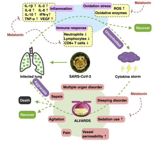 Как укрепить иммунитет и защититься от ОРВИ и, вероятно, COVID-19. Факты доказанные наукой - 6
