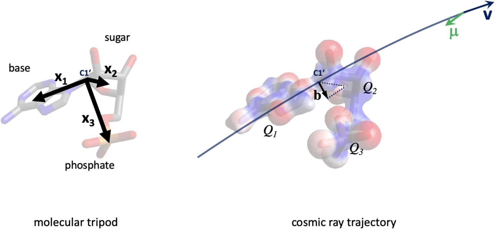 Хиральность, космические лучи и эволюция - 7