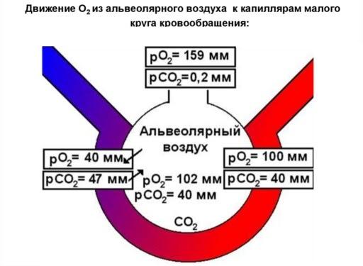 CO2, Sp02 и COVID-19: зачем нужно чаще проветривать (немного замеров) - 5