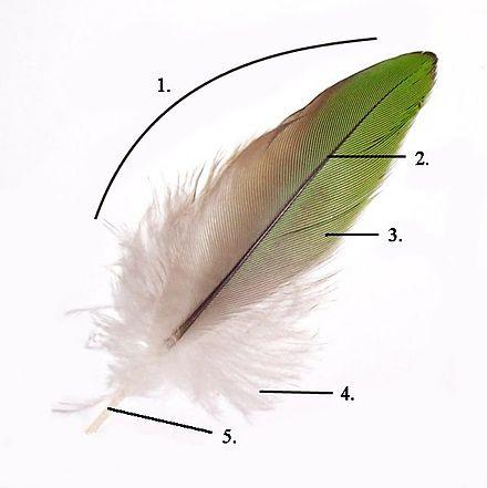 Насекомое, птица и растение: защита от разрушительной силы дождя за счет наноструктур - 4