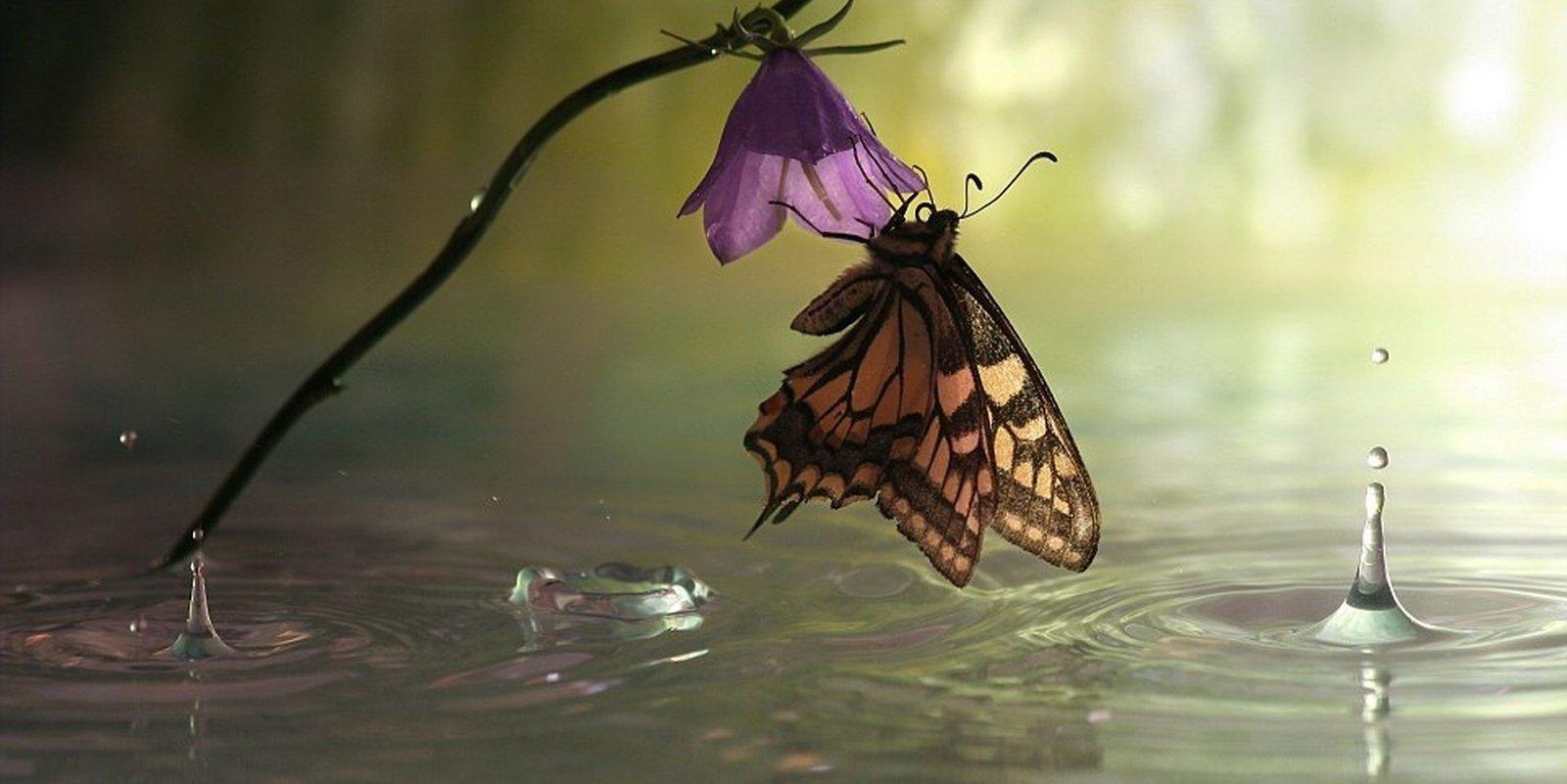 Насекомое, птица и растение: защита от разрушительной силы дождя за счет наноструктур - 1
