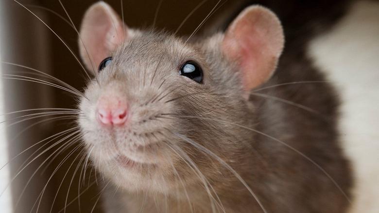 «Крыса» в Twitter. Так хакеры взломали Маска, Гейтса и остальных