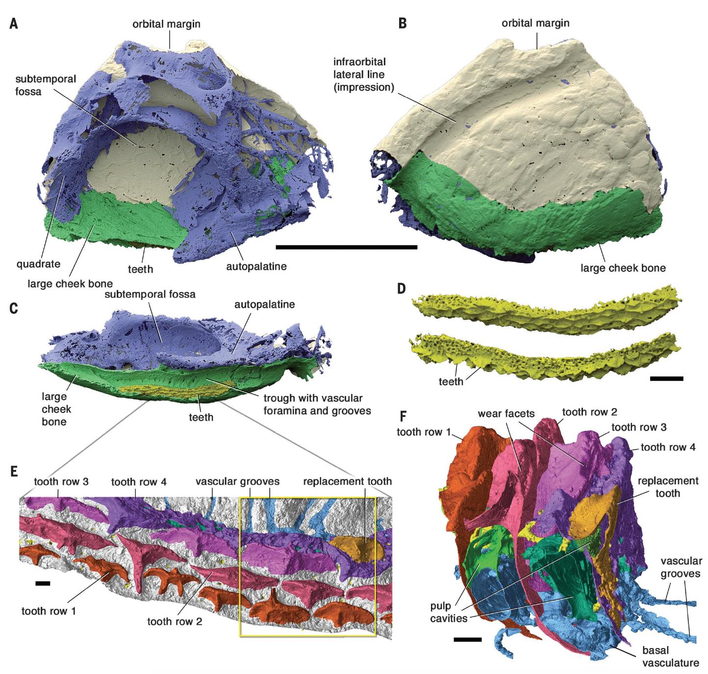 Забытая эволюция челюстей: от дунклеостея до человека - 5